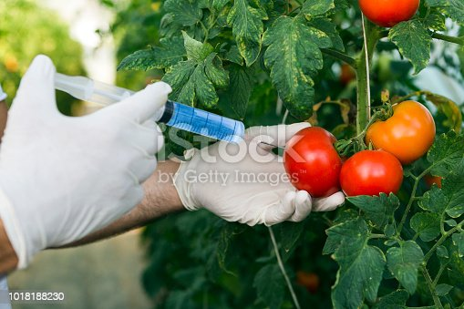 Injection into red tomato