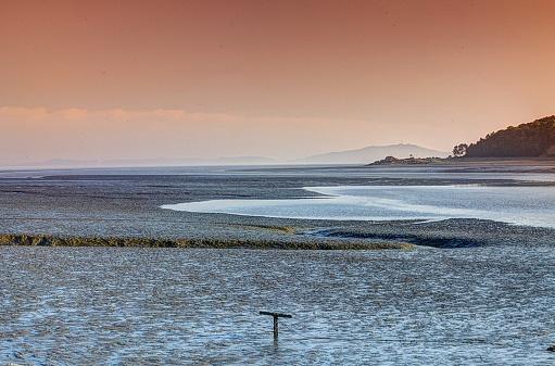 VH525 Modo Tidal Flat
