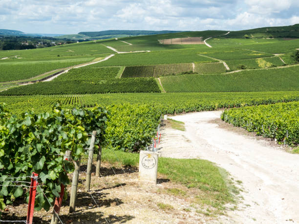Moet & Chandon in Ay, Champagne, France Ay, Champagne, France - 11 August 2014:  Hills covered with vineyards in the wine region of Champagne, France. Moet & Chandon moët & chandon stock pictures, royalty-free photos & images