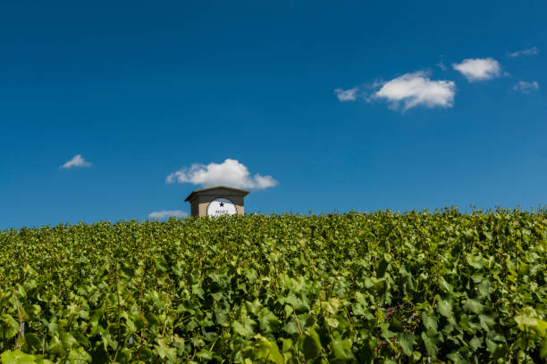 Moet Chandon Vineyard House Epernay: Champagne vineyard of Moet Chandon in summer with blue sky and small house, France. moët & chandon stock pictures, royalty-free photos & images