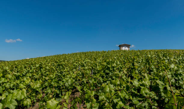 Moet Chandon Vineyards and House Epernay: Champagne vineyard of Moet Chandon in summer with blue sky and small house, France. moët & chandon stock pictures, royalty-free photos & images