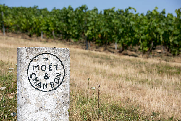 Moet & Chandon Vineyards, France Champagne House Epernay, France - July 16, 2015: Moet & Chandon vineyards, located outside of the city, are marked with a concrete name plate.  The Champagne growing region is famous for its quality and prestigious brands. moët & chandon stock pictures, royalty-free photos & images