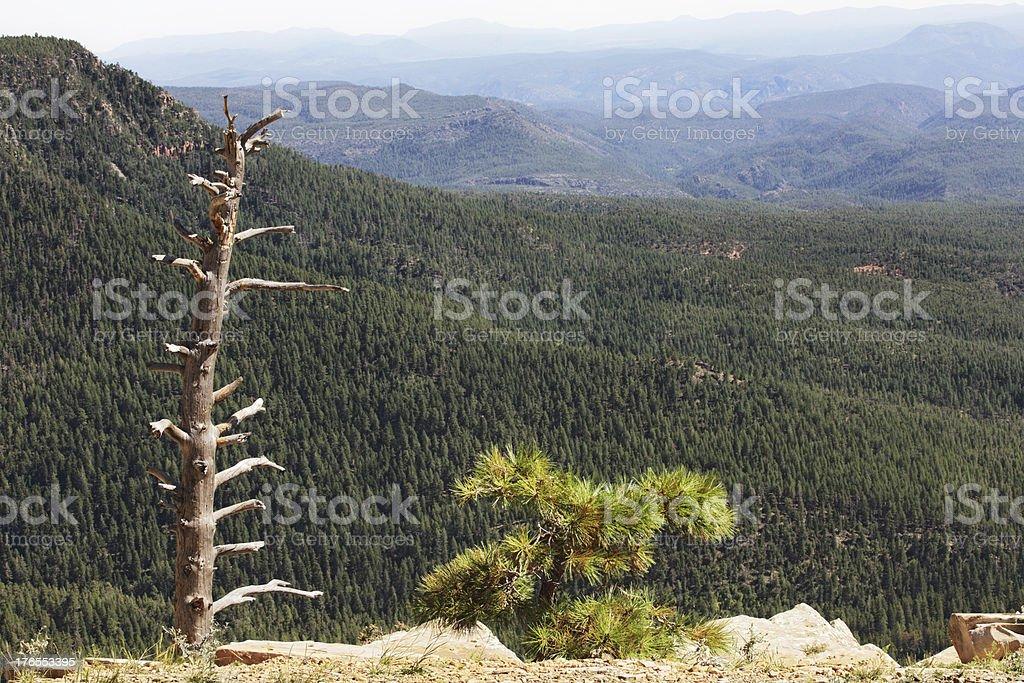 Mogollon Rim Coconino Forest Landscape royalty-free stock photo
