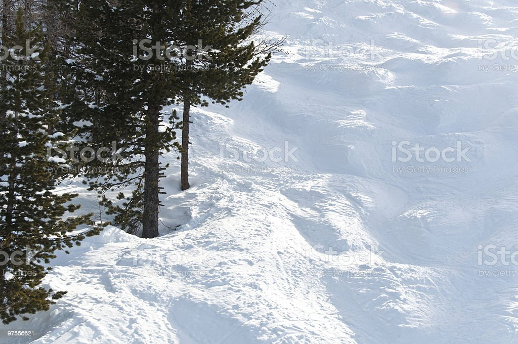 Mogul slope with trees royalty-free stock photo