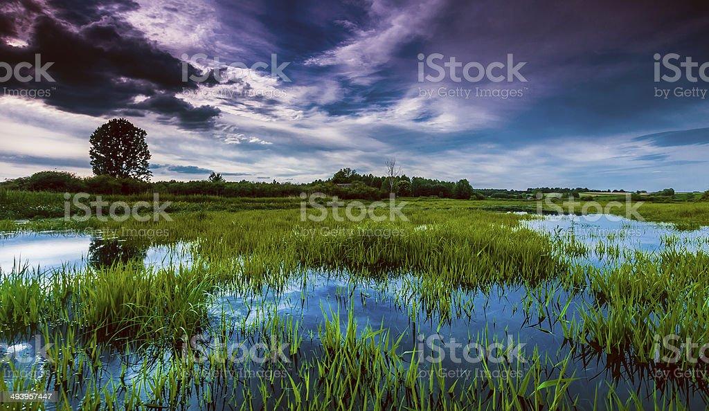Moist Grass stock photo