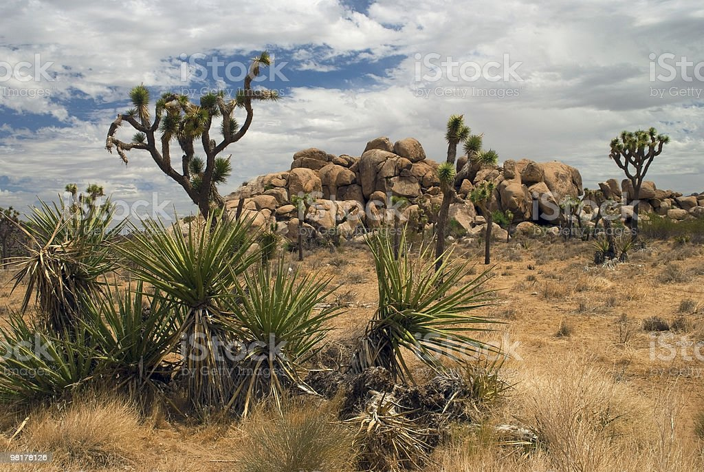 Mojave Desert Life royalty-free stock photo