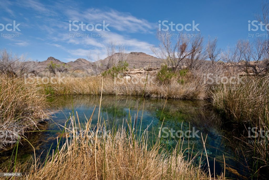 Mojave Desert Oasis stock photo
