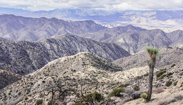 Mojave Desert Views from Warren Peak stock photo