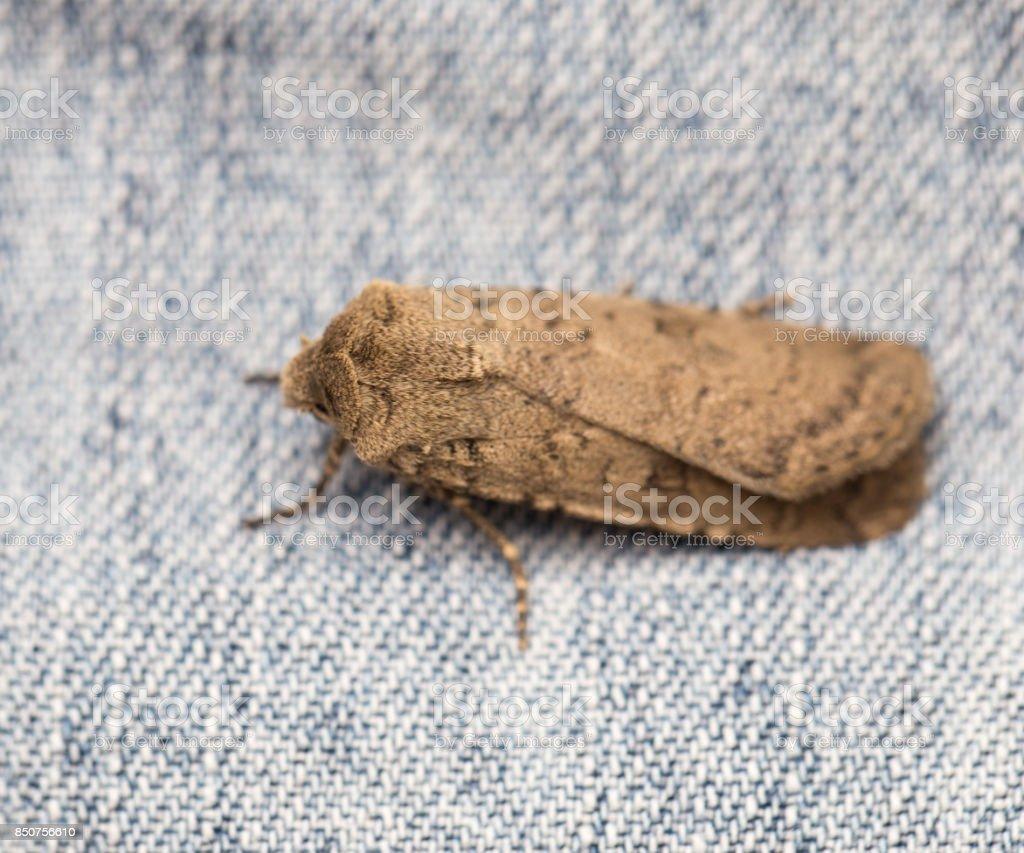 mol butterfly. macro stock photo
