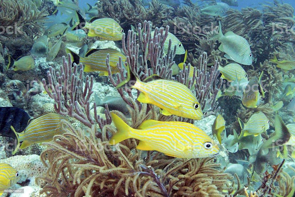 Molasses Reef stock photo