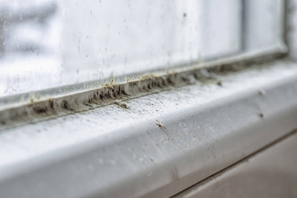 Mold and dirt on the window stock photo