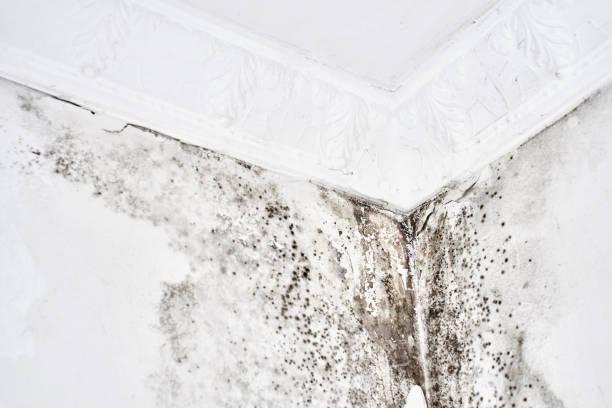 Form. Aspergillus. Schwarzer Pilz auf einer weißen Wand in einer Ecke an der Decke.
