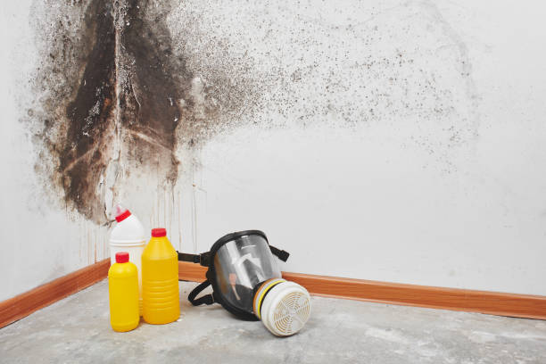 """Mold. Aspergillus. Detergents, household gloves, a sponge, a bucket on a white wall background with a black fungus.""""n"""