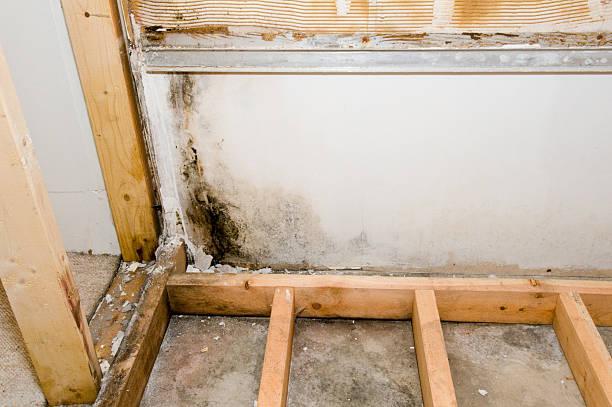 mold growing in basement bathroom - schimmel stockfoto's en -beelden