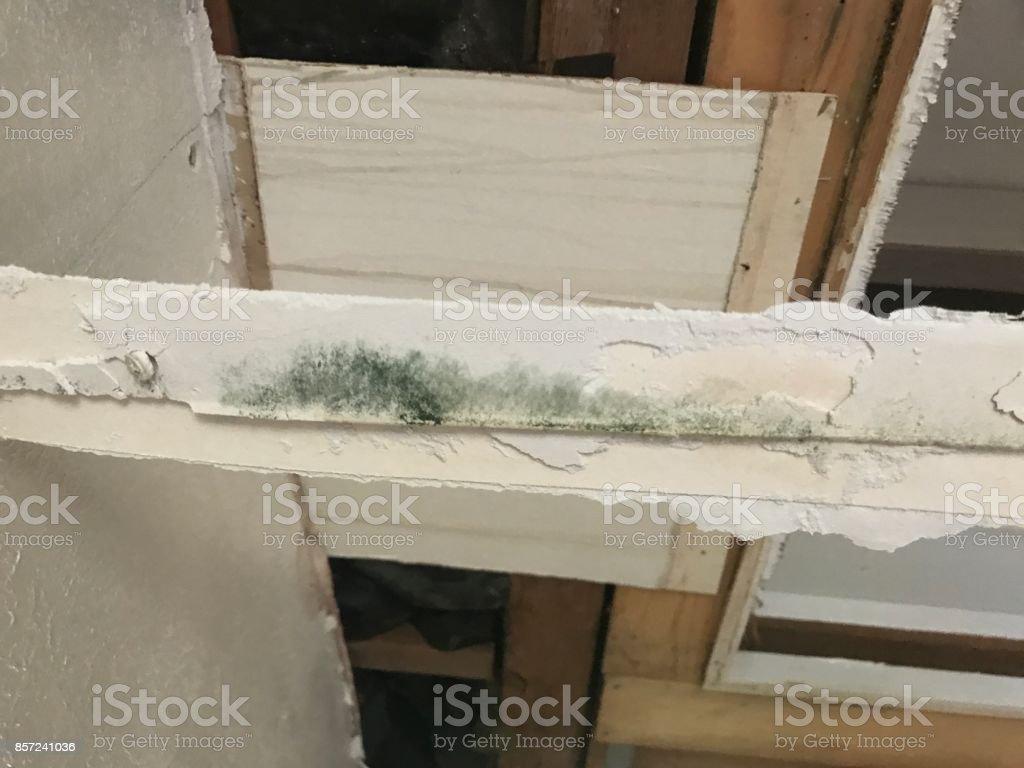 Mold growing on sheetrock tape stock photo