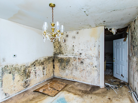 Mold growing throughout a home