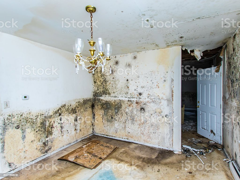 Mold growing throughout a home stock photo