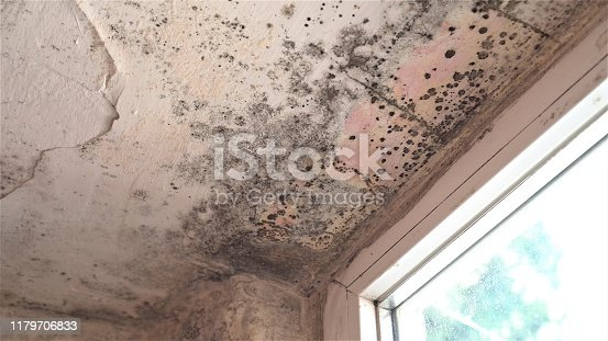 656168432 istock photo Mold growth. Damp walls, ceiling, window frames and glass in home. Molds thrive on moisture and reproduce by means of tiny, lightweight spores that travel through the air 1179706833