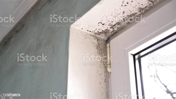 Mold growth mould spores thrive on moisture mold spores can quickly picture id1179706829?b=1&k=6&m=1179706829&s=612x612&h=p e8focausvaellt9oegq 230yb4556 ckrgfng9czo=