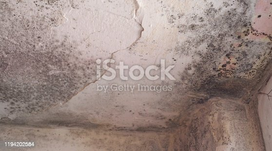 656168432 istock photo Mold growth wherever there is dampness and moisture, like basements, attics, kitchens, bathrooms or areas that have experienced flooding 1194202584