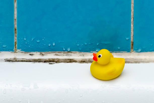schimmel in bad, een eend speelgoed, badkamer - meeldauw stockfoto's en -beelden