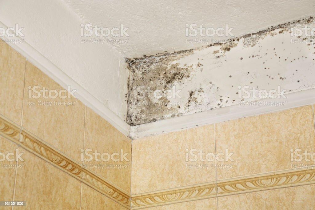 mold in bathroom stock photo