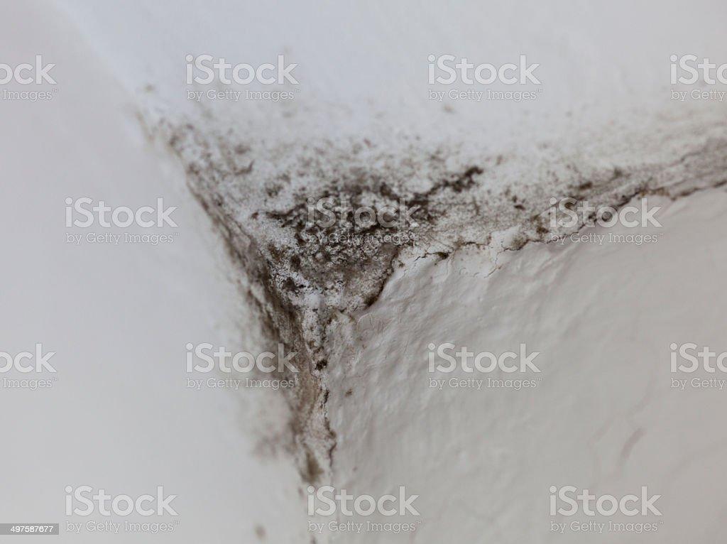 Mold in corner stock photo