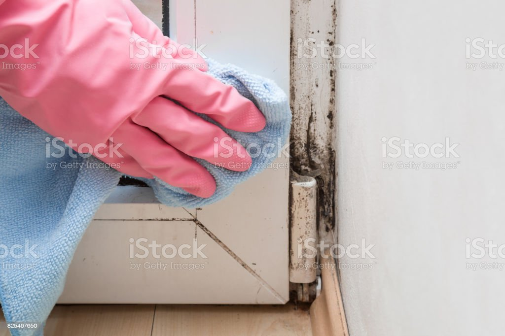 Mold in the window corner. Hand in rubber protective glove with microfiber cloth trying remove it. - Foto stock royalty-free di Addetto alle pulizie