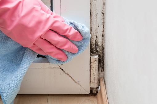 Mold In The Window Corner Hand In Rubber Protective Glove With Microfiber Cloth Trying Remove It - Fotografie stock e altre immagini di Addetto alle pulizie
