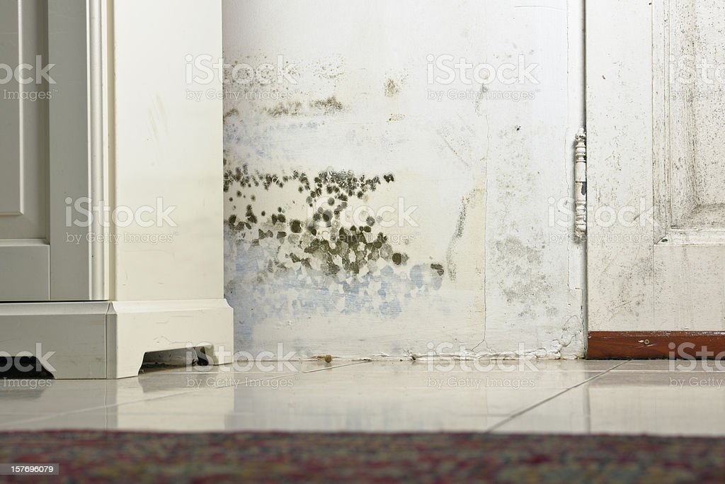Mold Mould Stains on Damp Wall and Door behind Cabinet stock photo