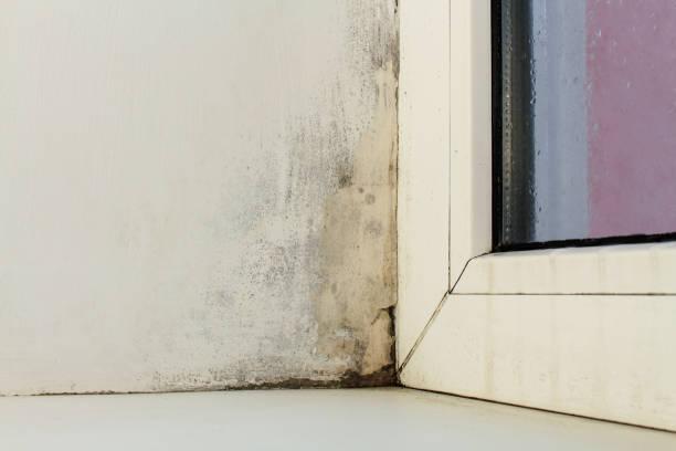 Mold near a window in the house the condensation on the window picture id905409454?b=1&k=6&m=905409454&s=612x612&w=0&h=g4ukfu4iahn4et2djk2zc1urh6bc nj4dcyay0 vc9e=