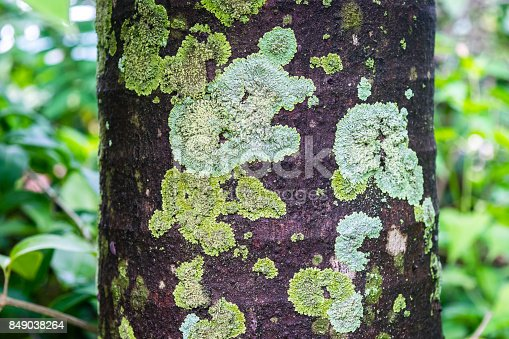 Mold on a tree bark texture