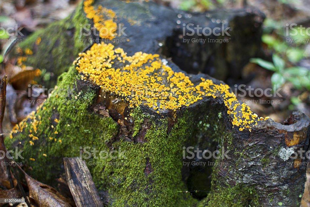 Mold on a Tree Stump stock photo