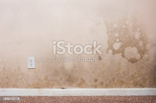 Mold on the walls and baseboard trim in the basement of a home from water leaking. This contributes to interior air pollution in the home, which can lead to respiratory problems.