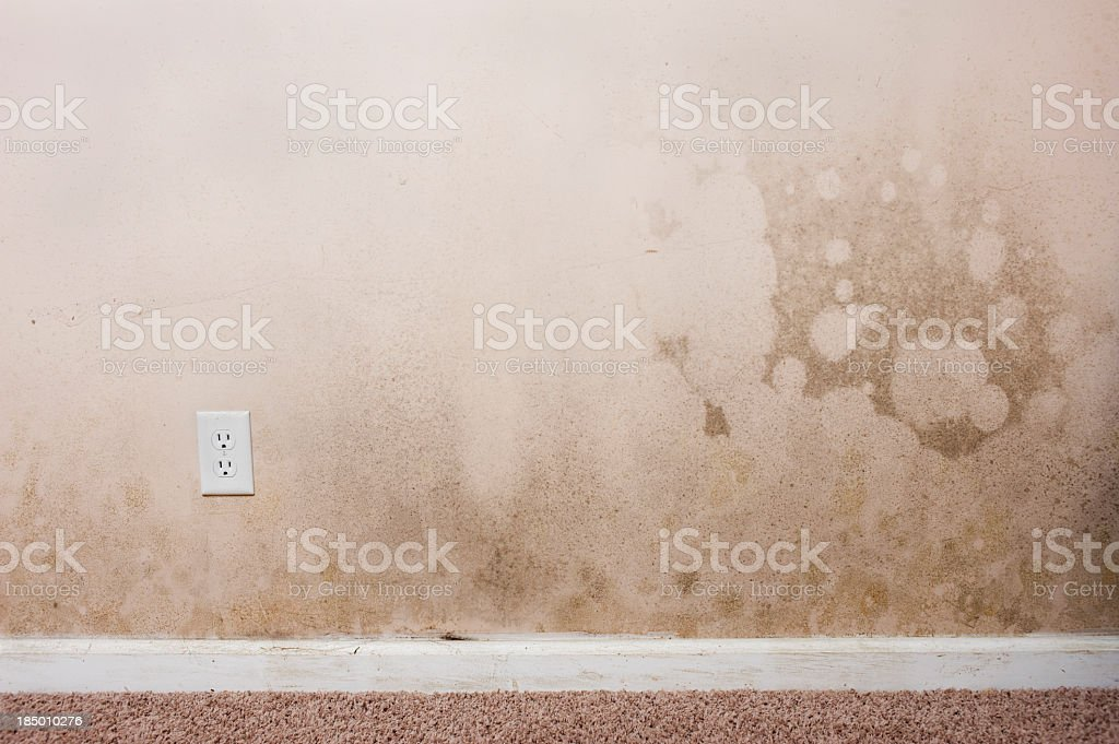 Mold on a wall in the interior of a home stock photo