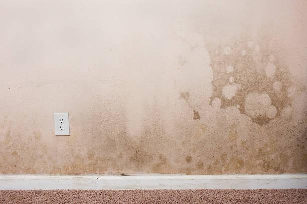 intérieur de maison moisissure - prise électrique à trois fiches photos et images de collection