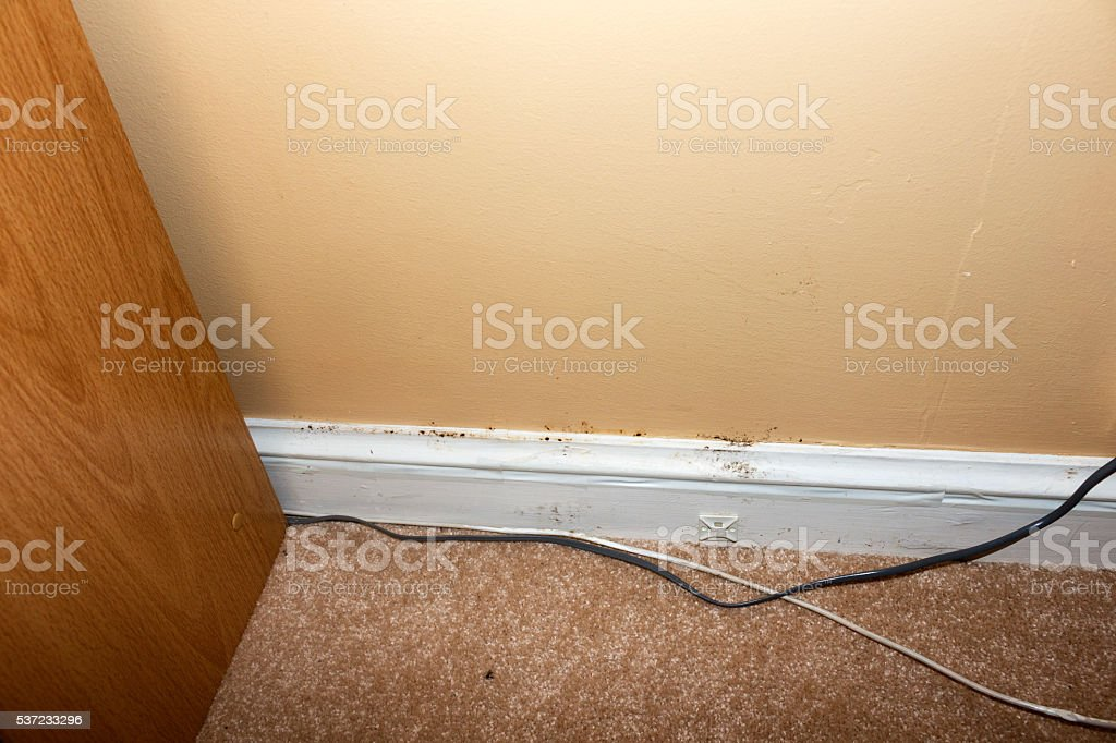 Mold on the walls and baseboard trim in the basement of a home from...