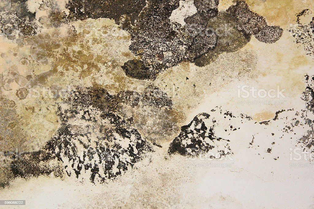 mold on interior wall of old house royalty-free stock photo