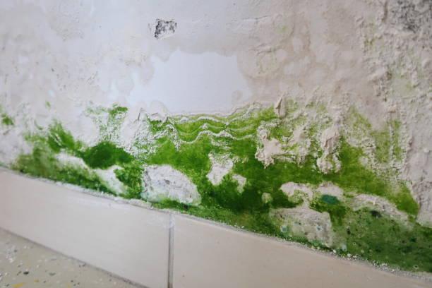schimmel op de muur - luchtvochtigheid stockfoto's en -beelden