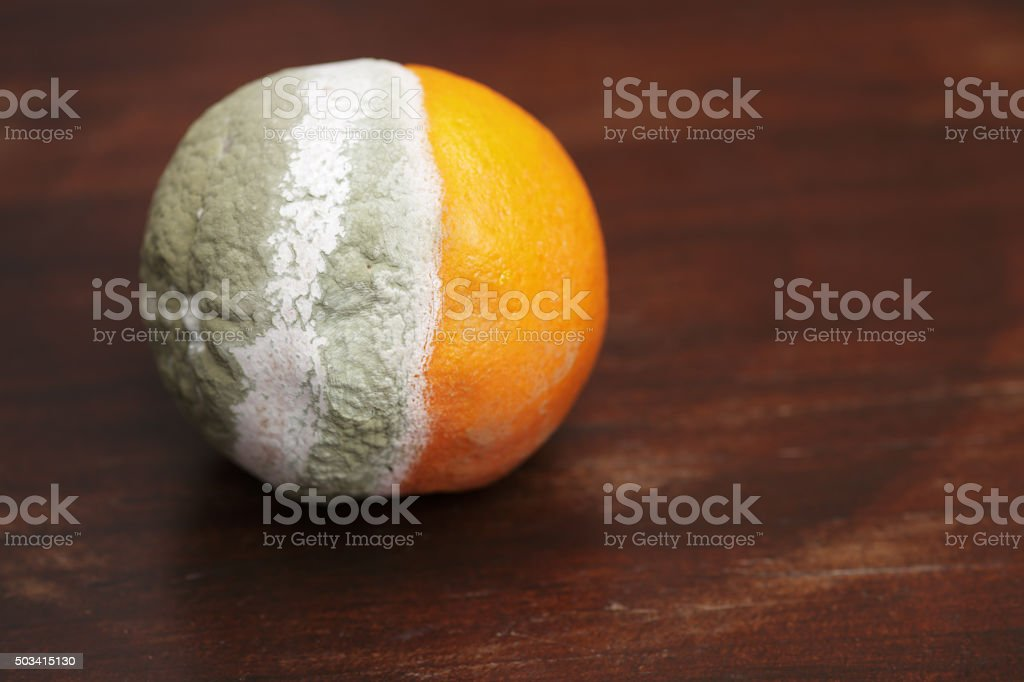 Mold stock photo