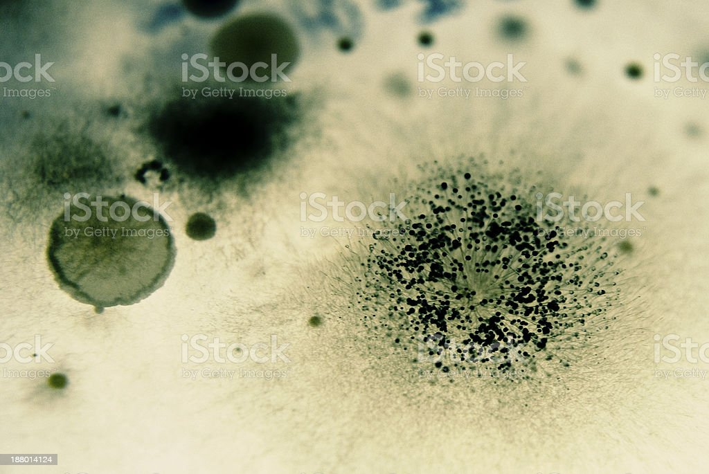 Mold spores and Bacteria stock photo