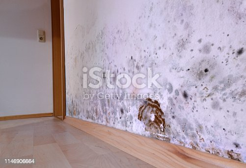 old house with mold on a wall
