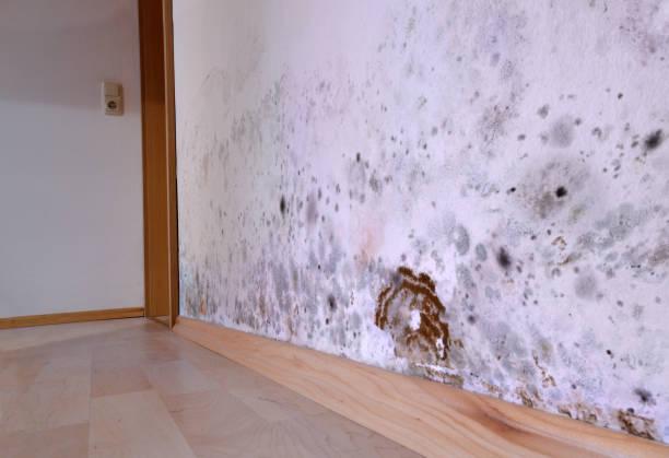 schimmel, muur, kelder, bruine kelder spons, schimmel, schade, - schimmel stockfoto's en -beelden