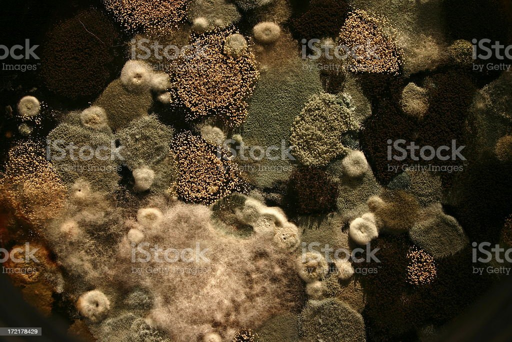 Moldy Aerial View stock photo