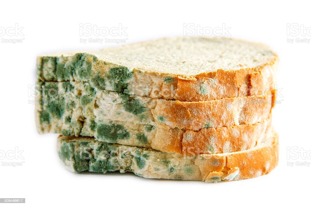 moldy bread stock photo