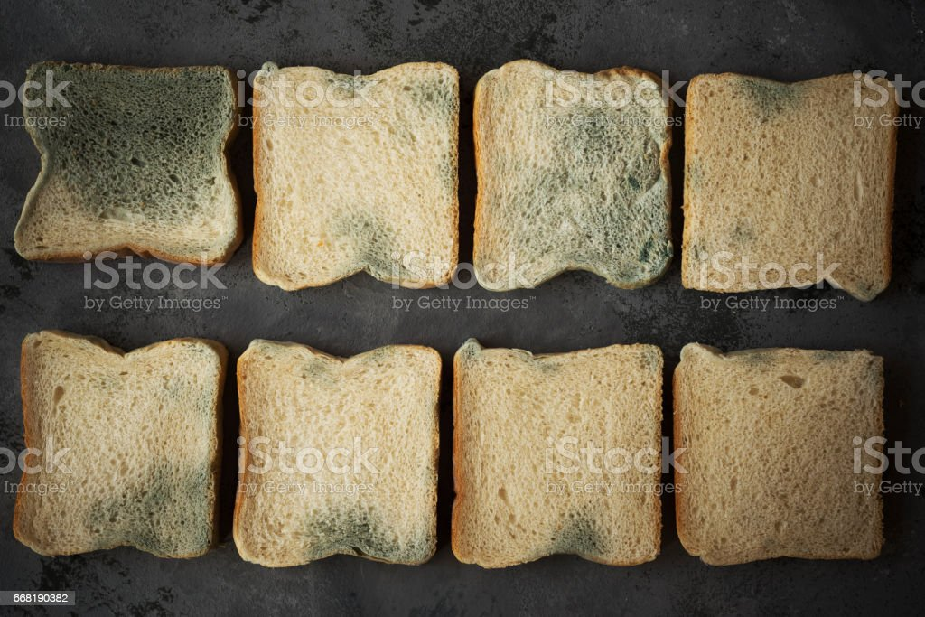 Moldy bread.Toast slices with fungus.spoiled food.Overhead view stock photo
