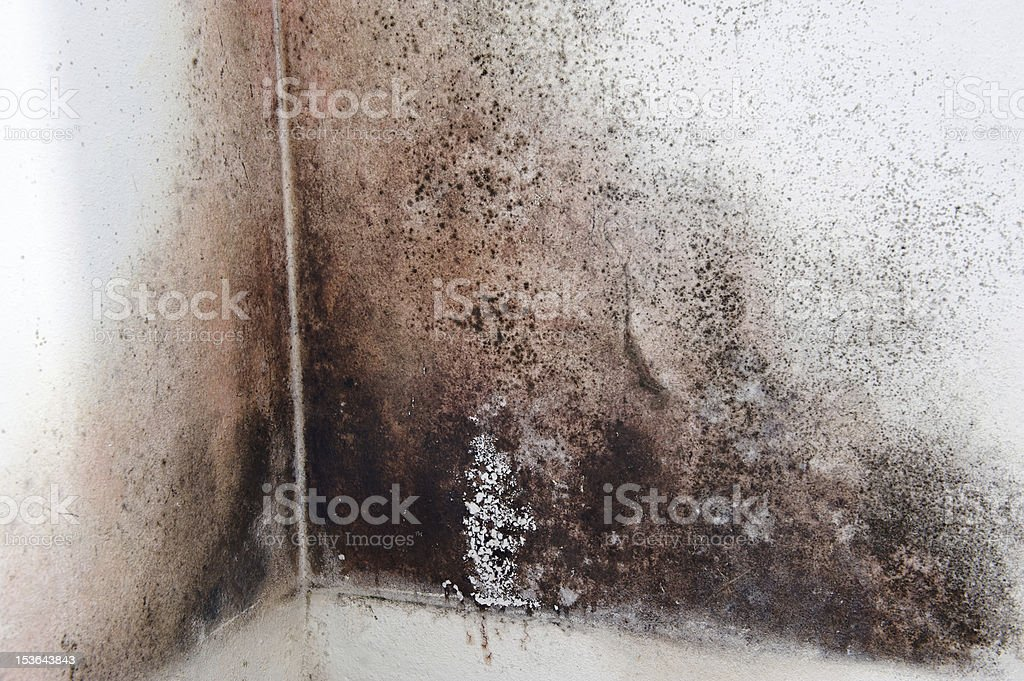 Moldy corner stock photo