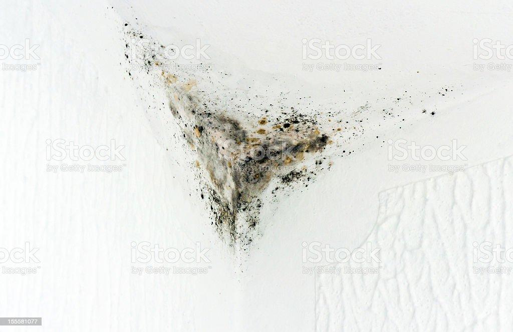 Moldy Corner royalty-free stock photo