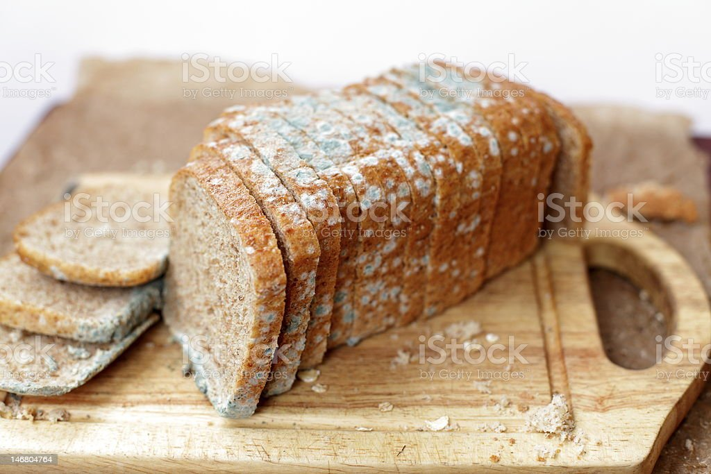 Moldy loaf of bread stock photo