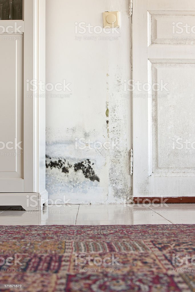 Moldy Mould Stains on Damp Door and Wall behind Cabinet royalty-free stock photo